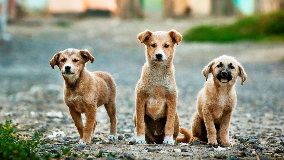 Луцьк витратить сотні тисяч гривень на відлов собак