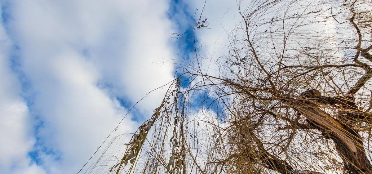 На Заході України можливий мокрий сніг та дощ: погода на сьогодні