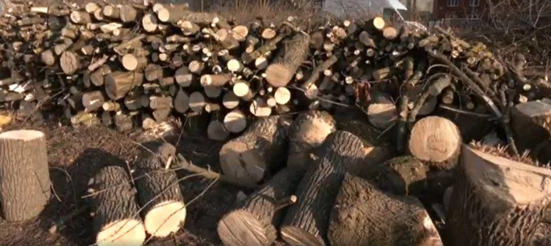 У Луцьку біля будівництва храму зрізали 30 дерев (відео)