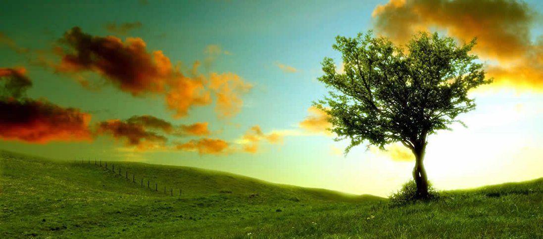 Що значить бачити дерево уві сні?