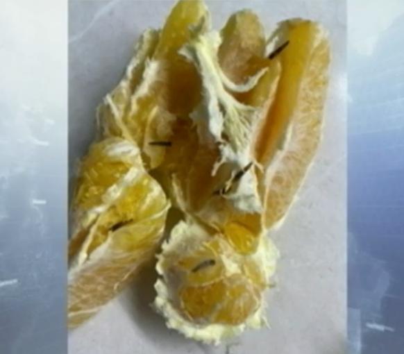 Апельсин з хробаками