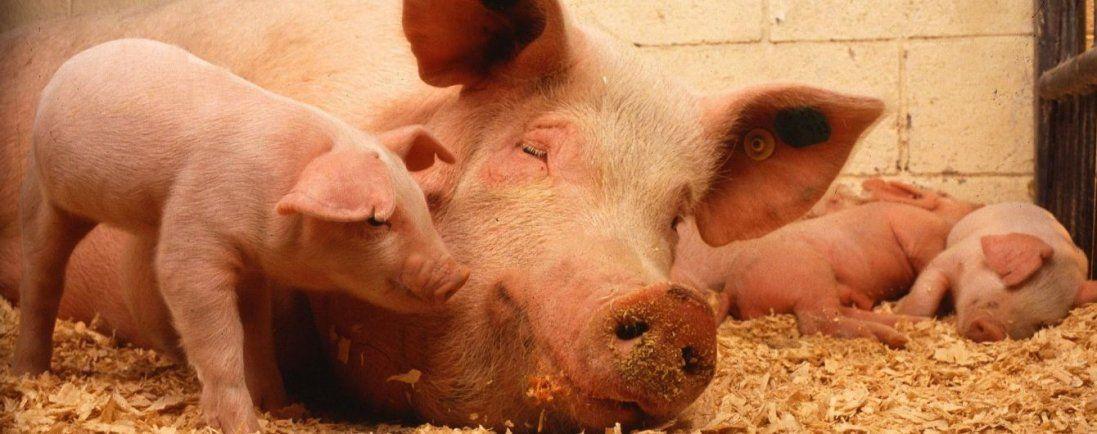 На Ковельщині заборонили торгівлю живими тваринами