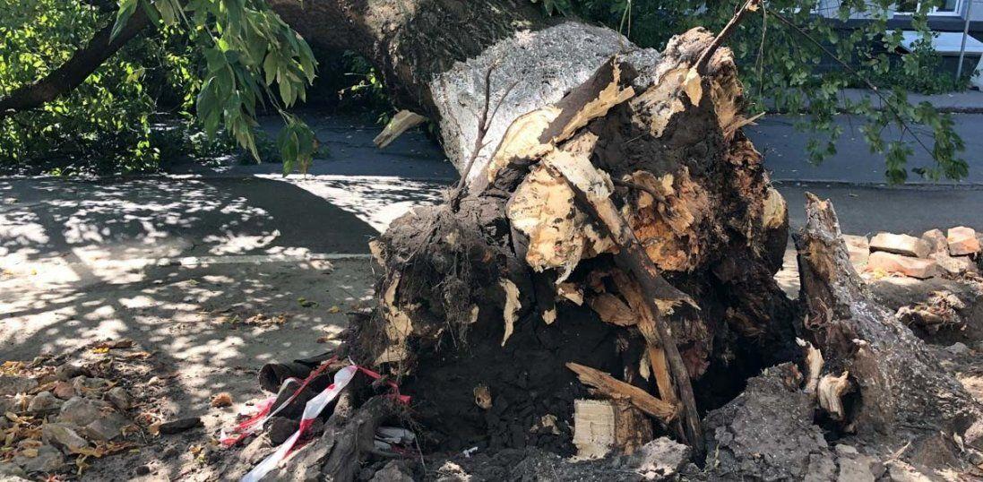 У Херсоні на 13-річну дитину впало дерево (фото)