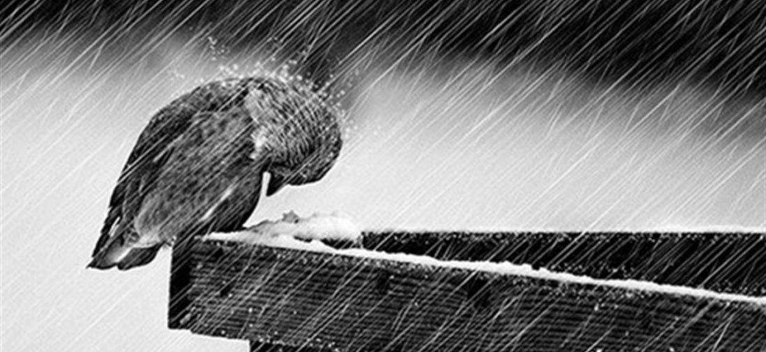 Пориви вітру і місцями дощі – погода в Україні 25 лютого