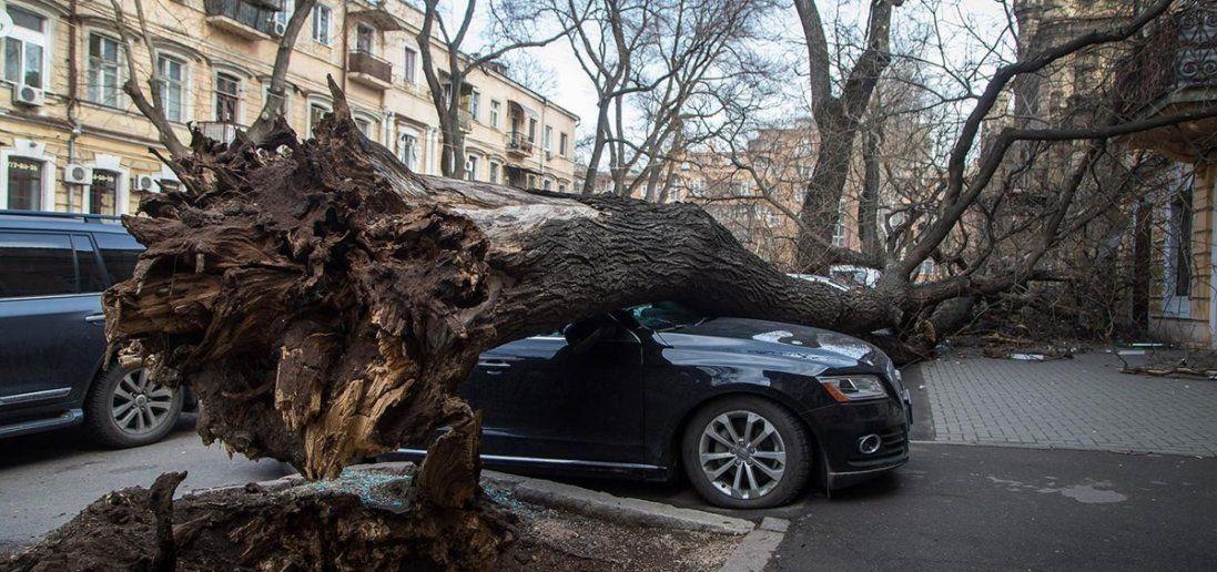 Затоплені траси, повалені дерева, зірвані дахи – в Одесі розгулялася негода (відео)