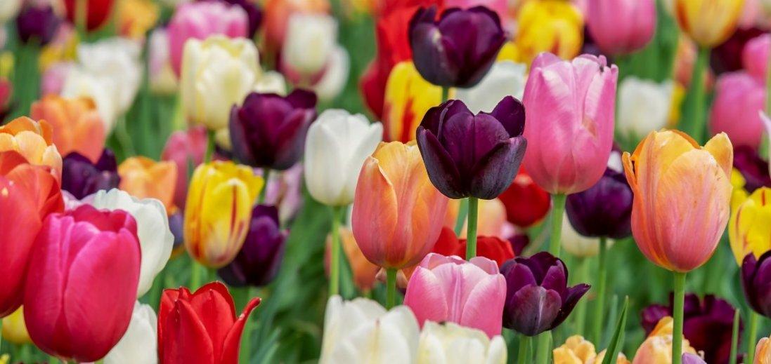По-весняному тепло і дощі – погода в Україні 13 березня