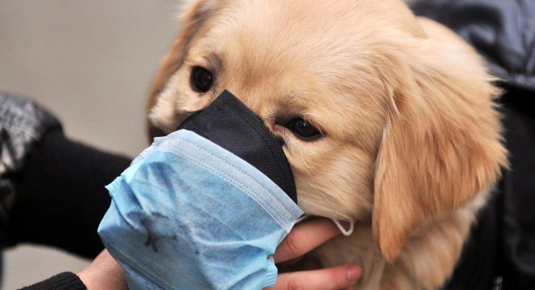 Помер собака, який підчепив коронавірус