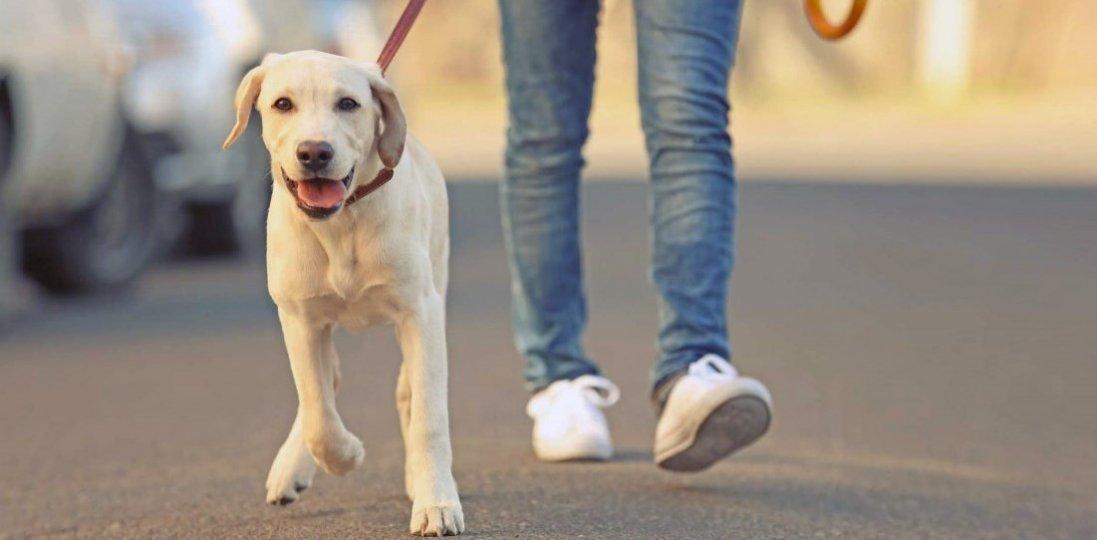 Пандемія коронавірусу: як після прогулянки знезаразити собаку