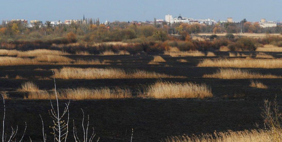 Моторошні світлини спаленого Гнідавського болота в Луцьку