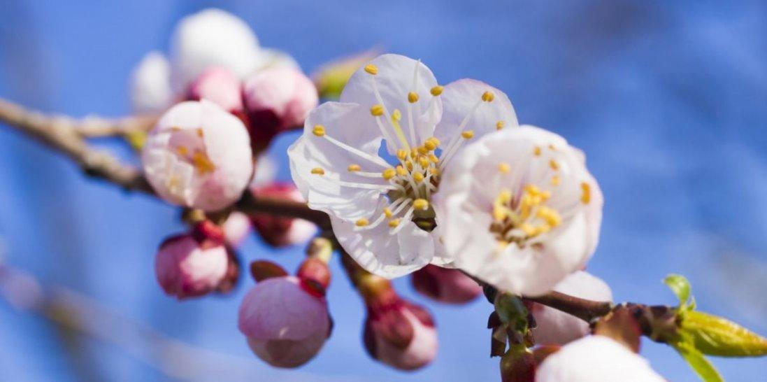 3 квітня: іменини, прикмети, заборони