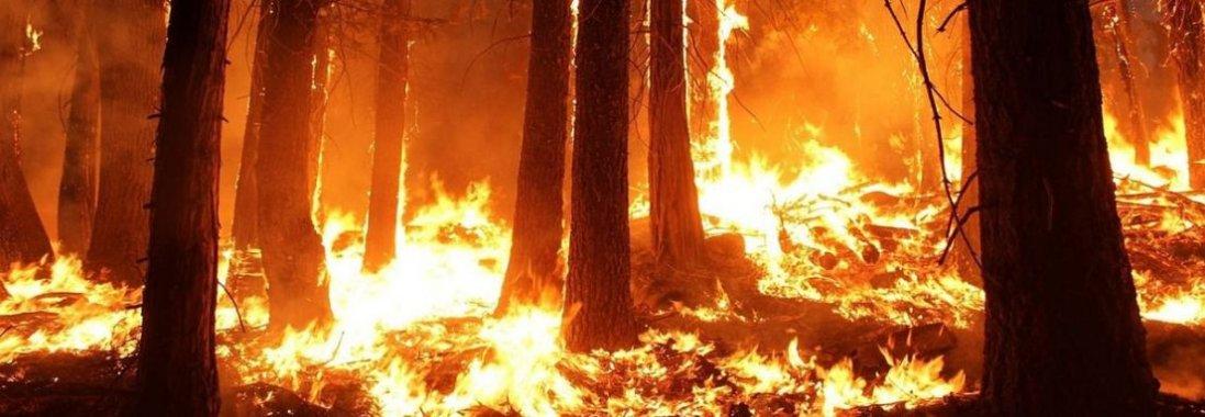 Поліція відкрила «кримінал» через пожежу в Чорнобилі