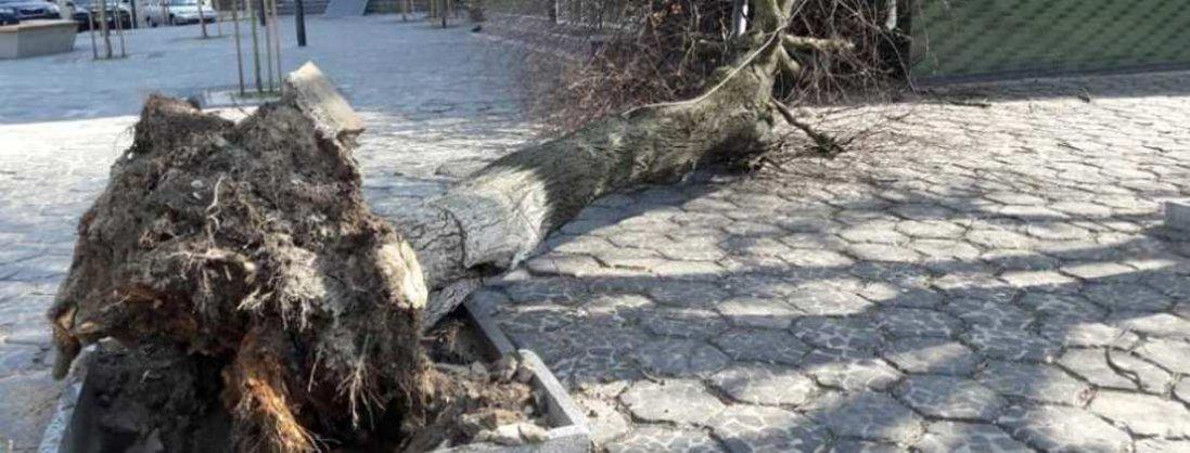 У центрі Луцька на магазин впало дерево