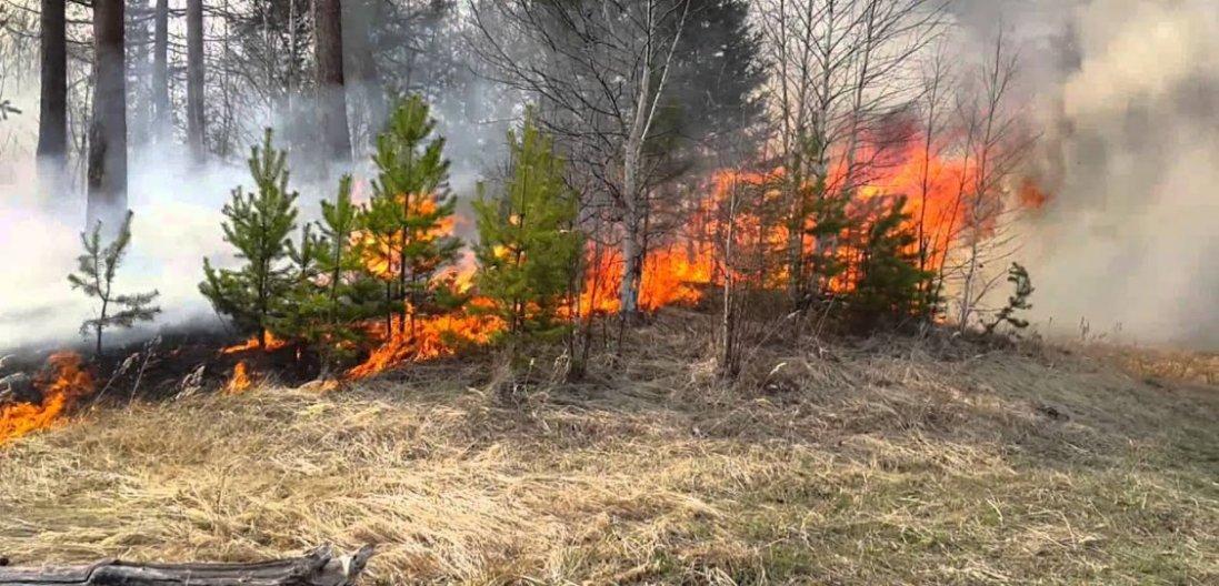 До зими через пожежі може вигоріти вся Україна