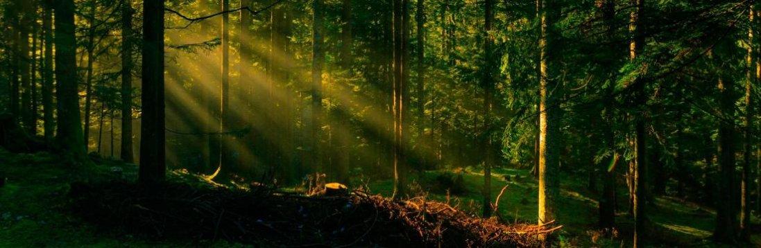 Екоінспектори виявили на Волині порушення в лісовій галузі на 7,8 млн грн