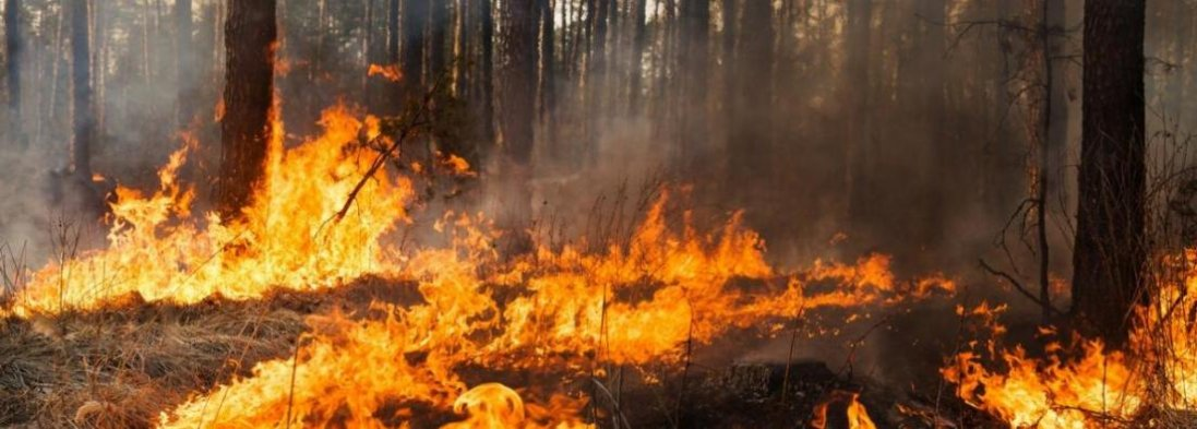 Пожежа у Чорнобилі: ДСНС відправила ще 50 рятувальників
