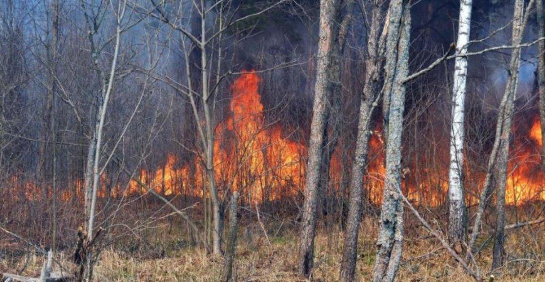 У Чорнобилі вже тиждень палають масштабні пожежі