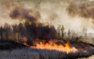 З'явилися відео, як пожежа наближається до ЧАЕС