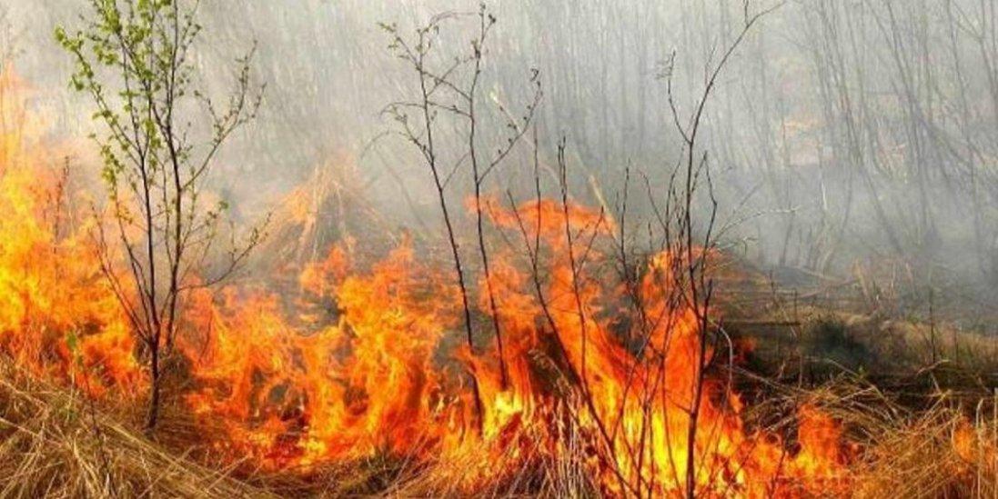 В Україні ввели нові суттєві штрафи за підпал трави