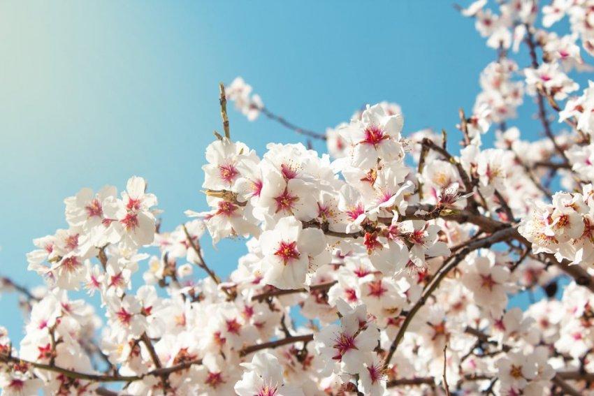 Але все-таки вже весна