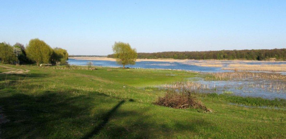 Чому міліє Стир та хто винен у забрудненні водойм