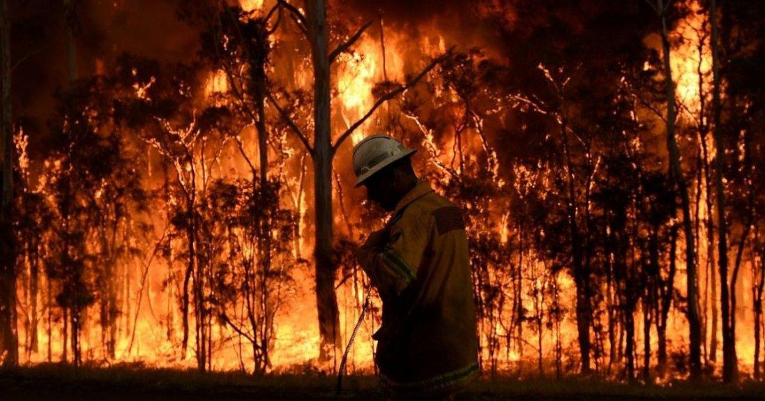 На Житомирщині спалахнула нова лісова пожежа