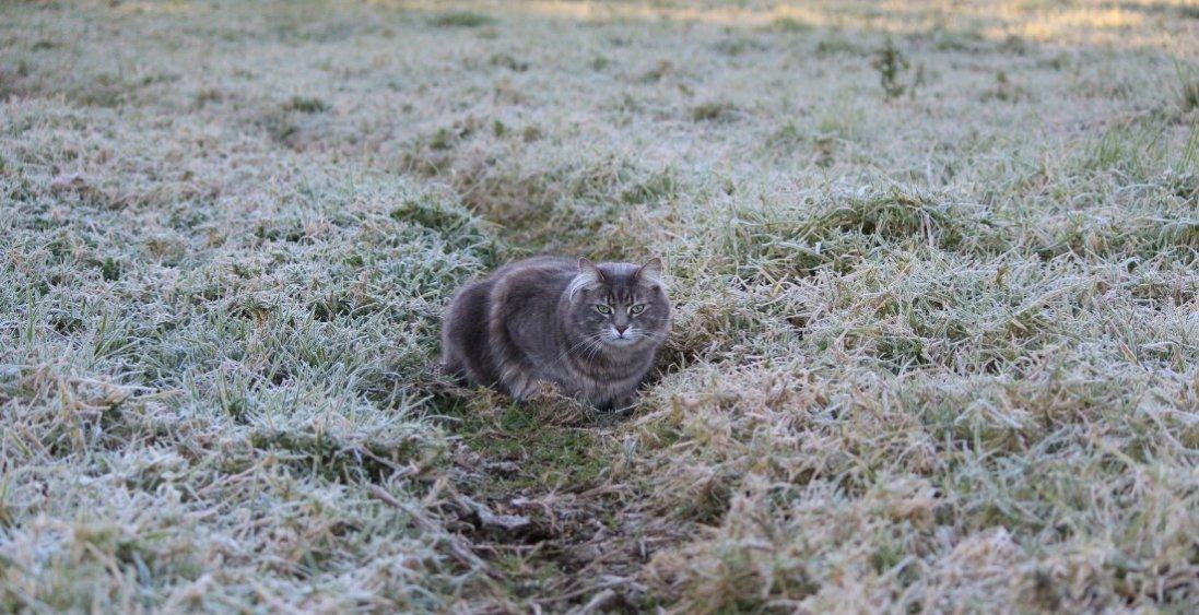 На Волині – заморозки до -5 градусів