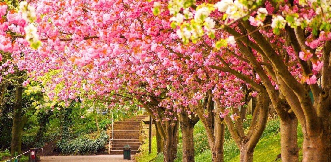 24 квітня: чому сьогодні не можна рубати дерева