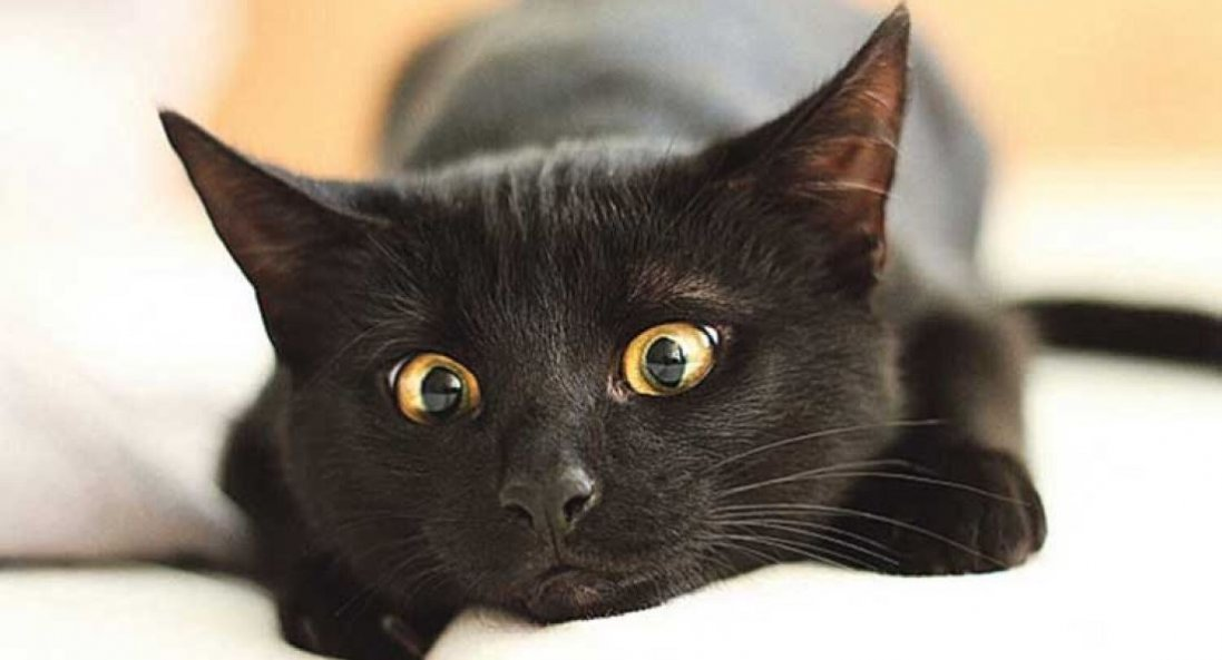 У В'єтнамі їдять чорних котів, нібито рятуючись від коронавірусу
