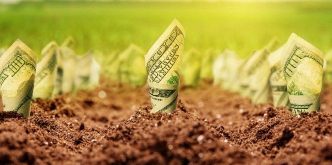 Ринок землі в Україні: хто і як зможе продати чи купити землю