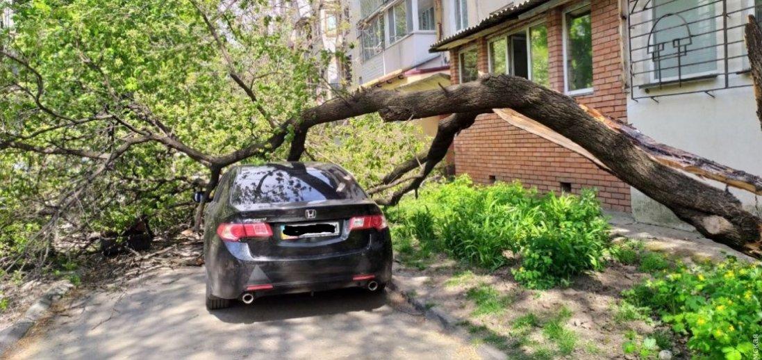 ВОдесі наавтомобіль звалилося дерево