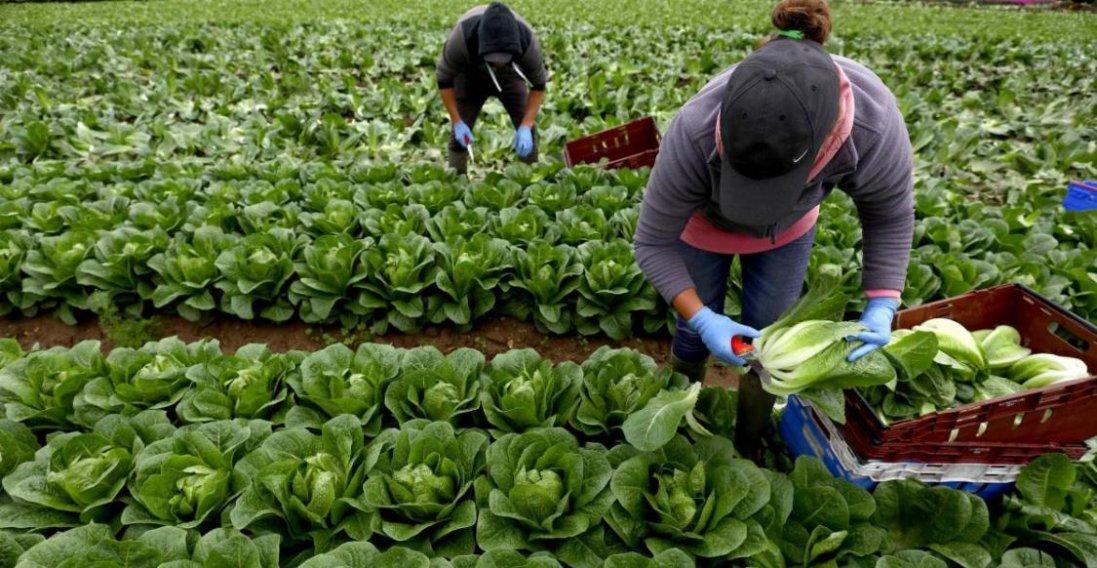 «Як без рук»: в Євросоюзі чекають українських заробітчан на сезонні роботи