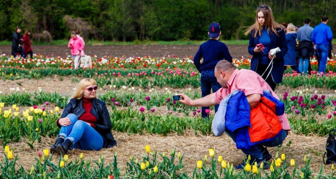 На Волині через карантин закрили знамените тюльпанове поле