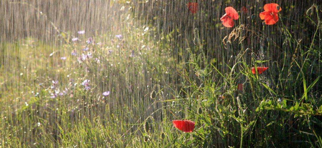 Дощі, град і грози – погода в Україні 5 травня