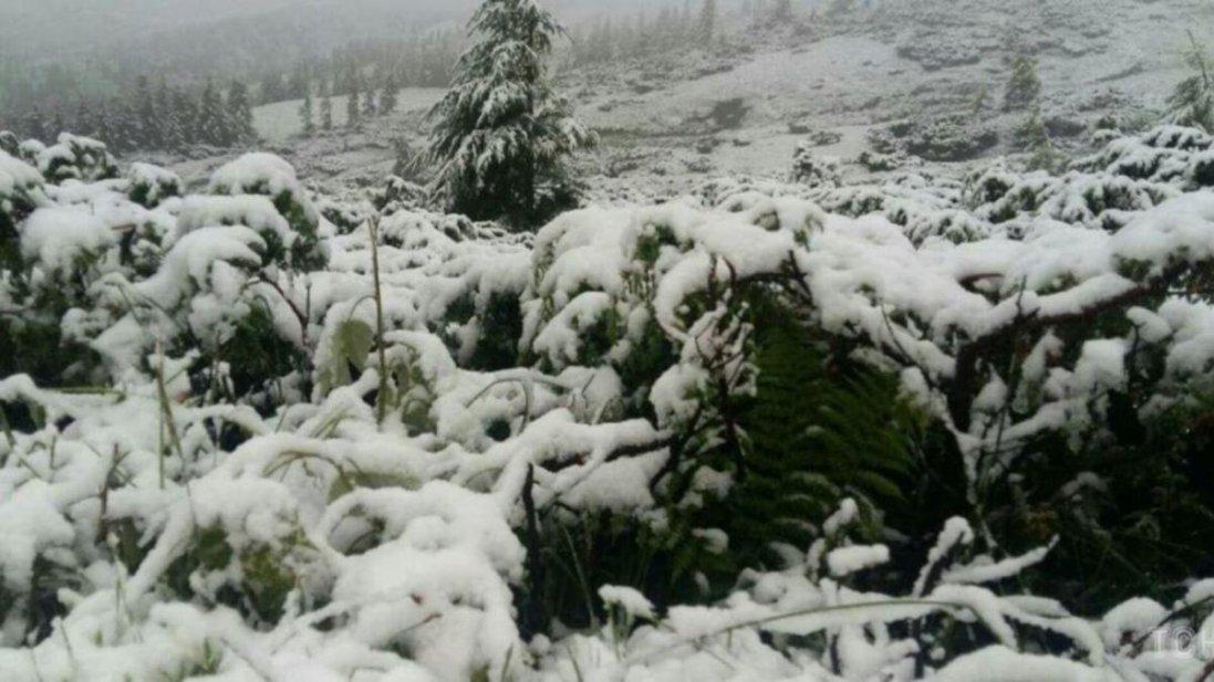 Яку частину Україну засипав сніг