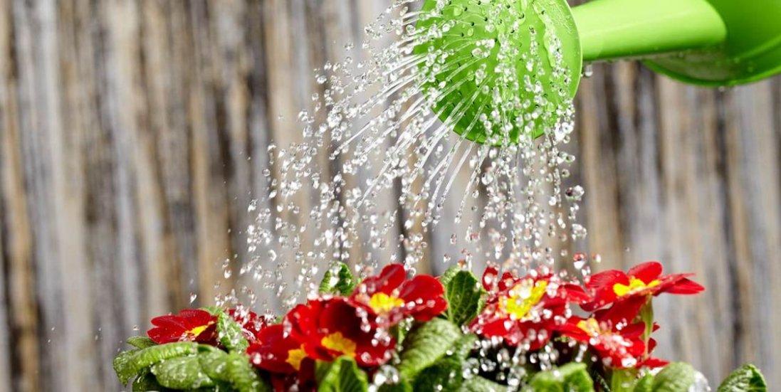 8 травня: чому сьогодні не варто поливати городи