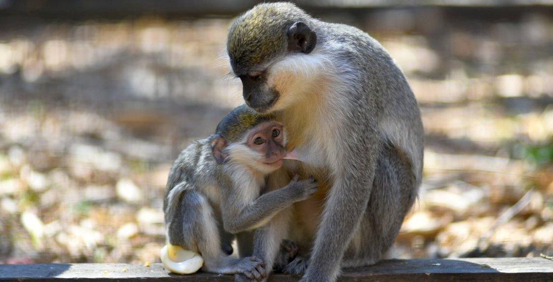 Які тваринки нещодавно народилися у Луцькому зоопарку