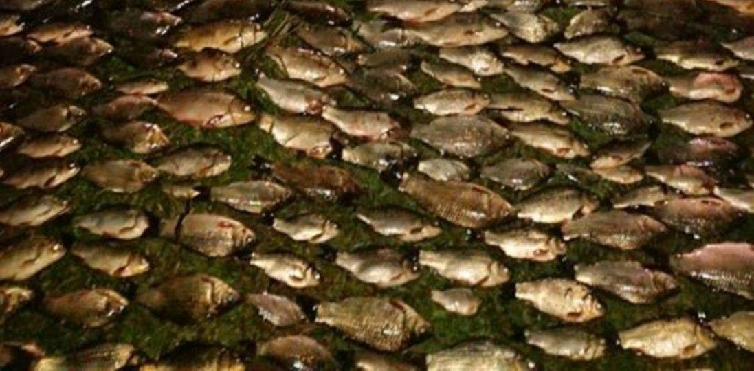 На Хмельниччині браконьєр електровудкою виловив більше тисячі рибин