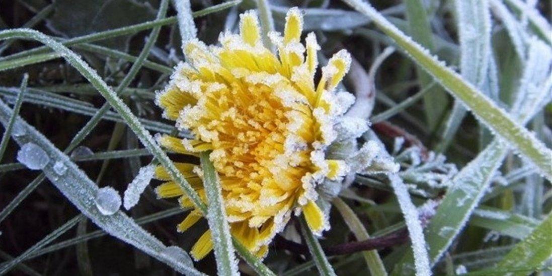 Дощ, мокрий сніг та заморозки: в Україну йде похолодання