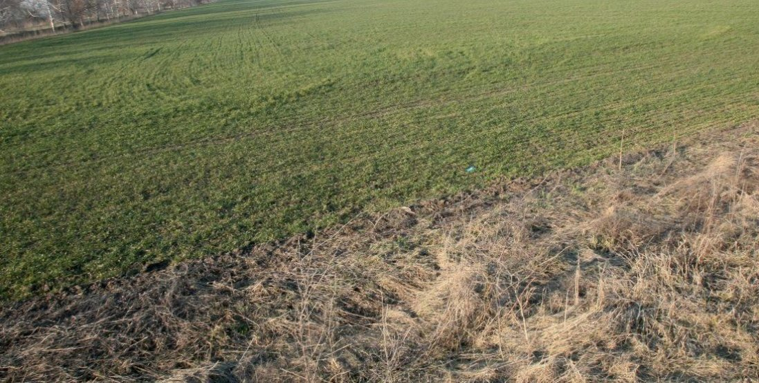 66-річний фермер через неврожай скоїв самогубство
