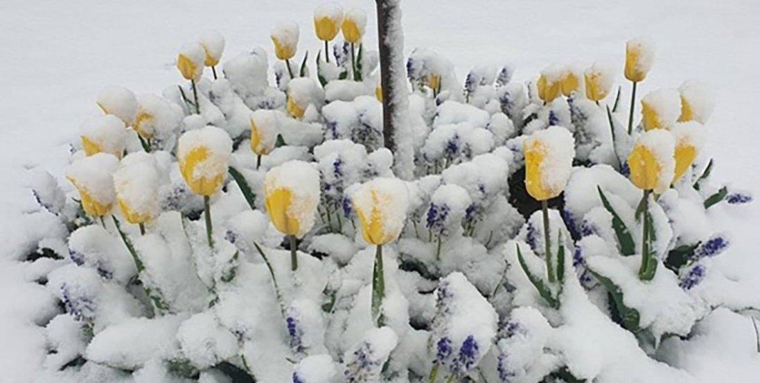 У Польщі сніг знищив врожай: фермери в шоці від снігопаду в травні