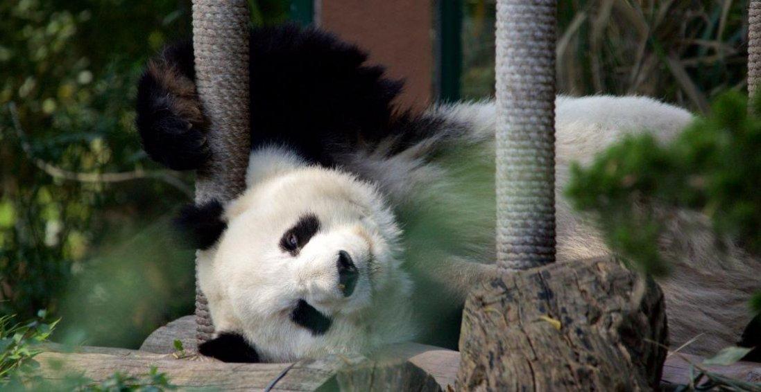 В Одесі зоопарк відновить роботу