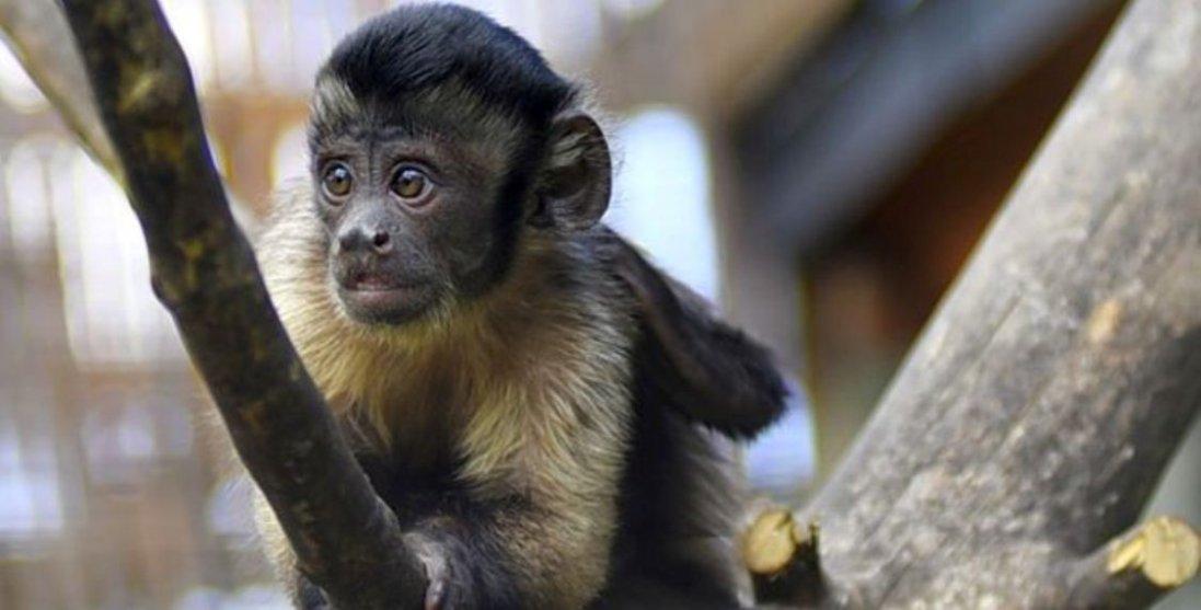 «Яке милоття»: атмосферні фото тваринок зоопарку  Луцька