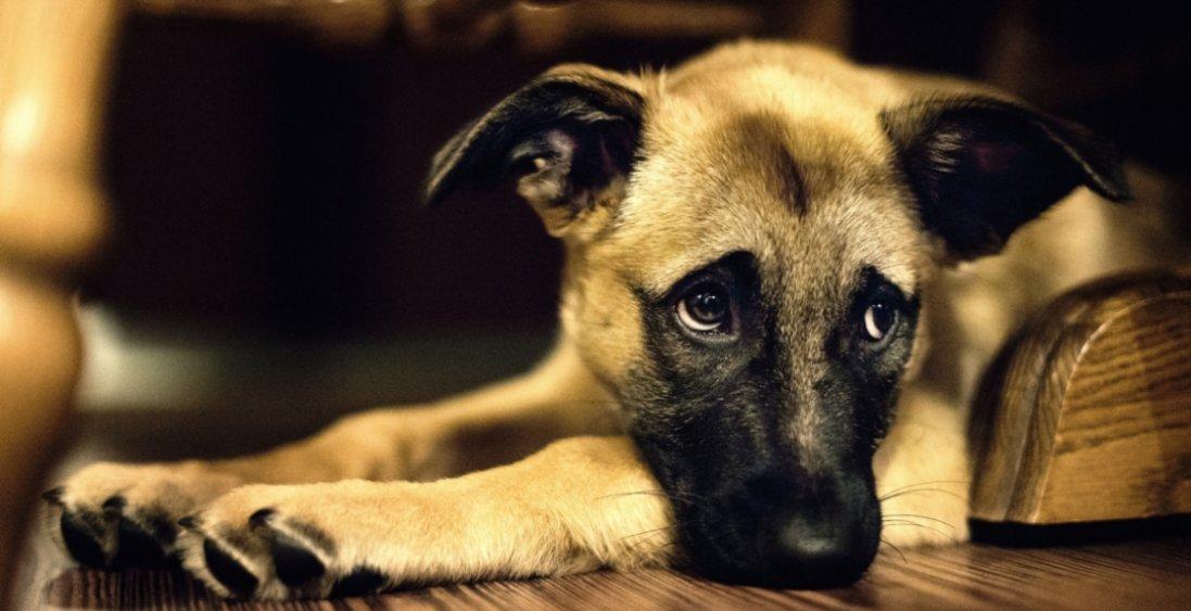 В Україні в людей забирають собак за борги – і це не жарт