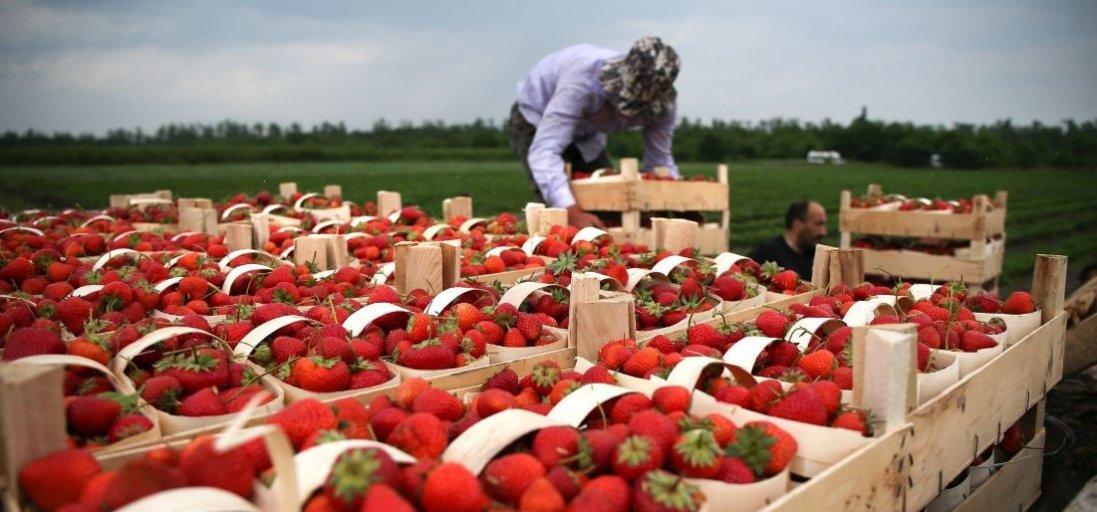 Заробітчани з України зможуть працювати в Польщі без двотижневої обсервації