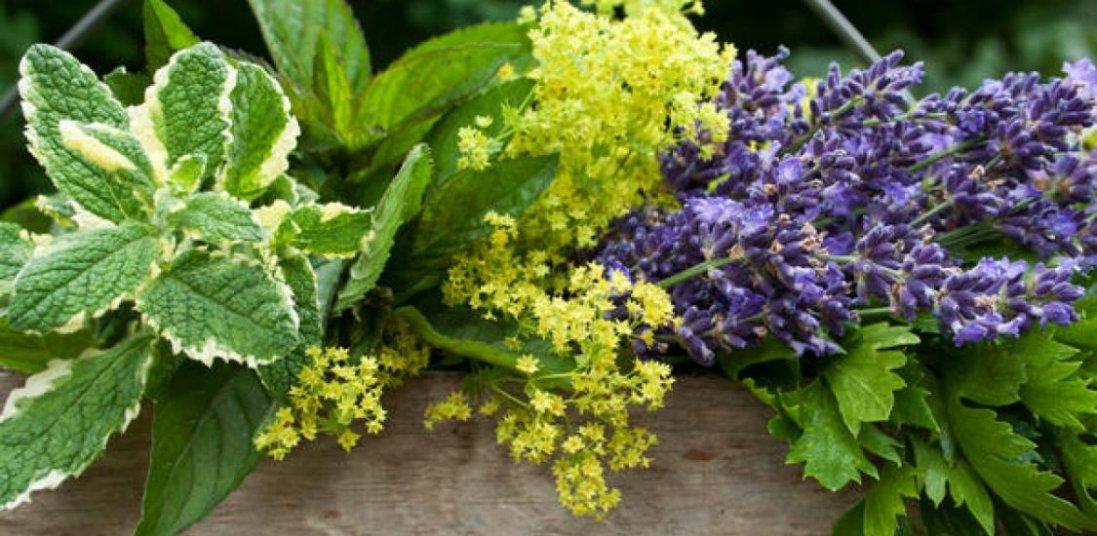 26 травня: сьогодні поминають родичів та збирають цілющі трави