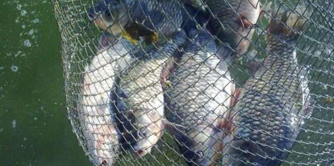 На Волині піймали браконьєрів, що витягали рибу сітками