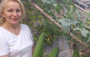 Натуральні мочалки для ванни господиня вирощує на городі