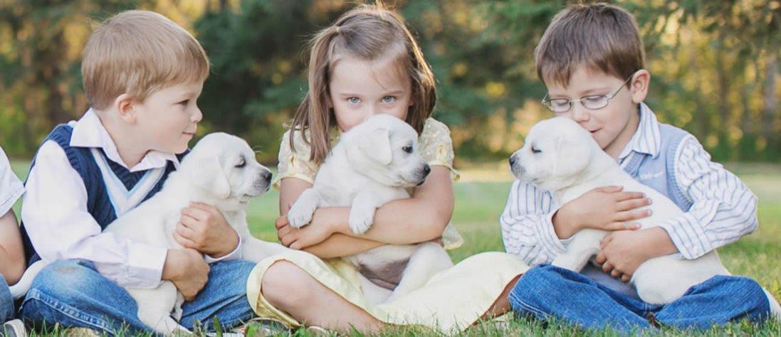 Як вибрати собаку для дитини?