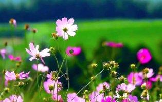 До чого сняться квіти: очікуйте приємних новин