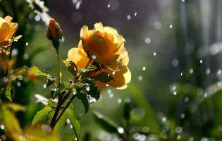 5 червня: чому сьогодні дощ – це добре